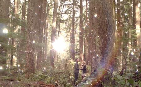 magic-woods